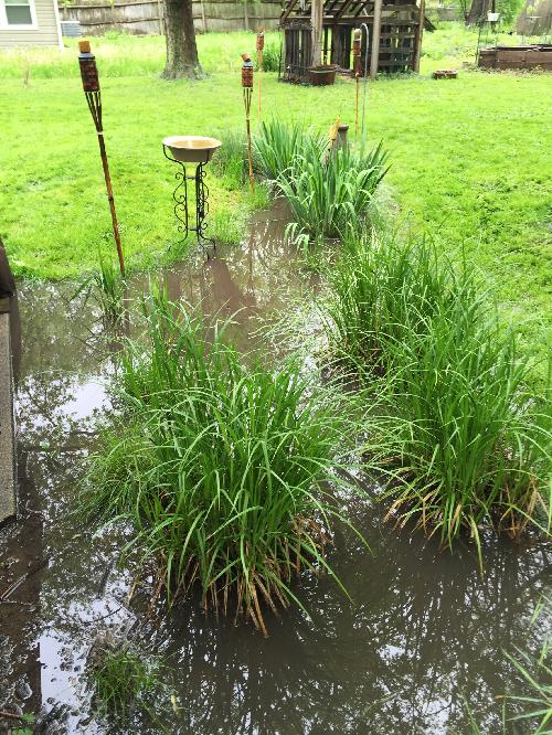 Rain Garden 02.jpg