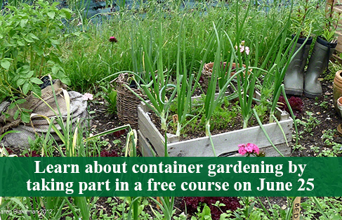 ParkForest_ContainerGardening_06252016.png