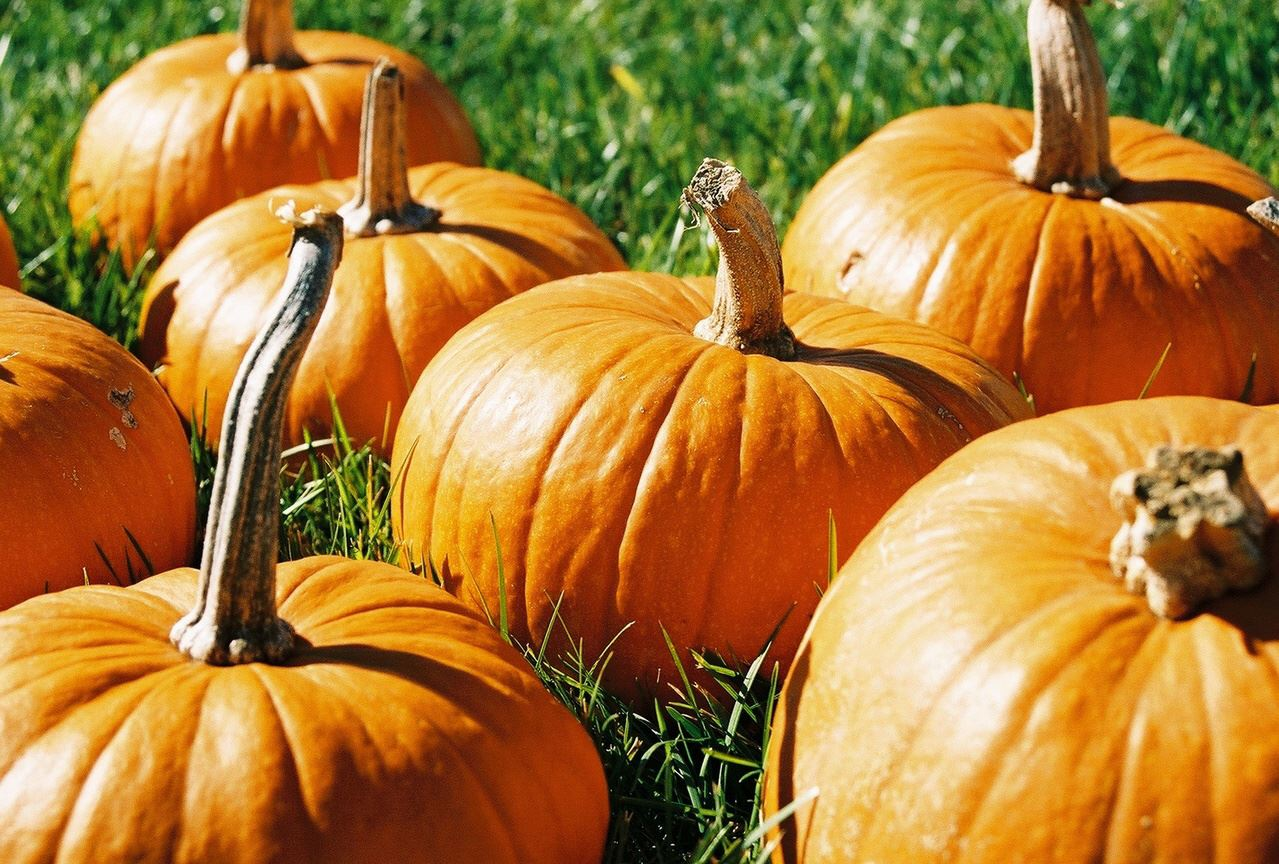 mini-pumpkins-1562846-1279x863