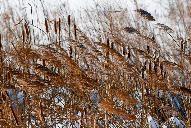 INDIAN GRASS WINTER